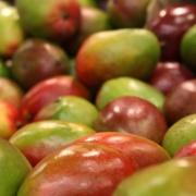 BioTrendy – African Mango
